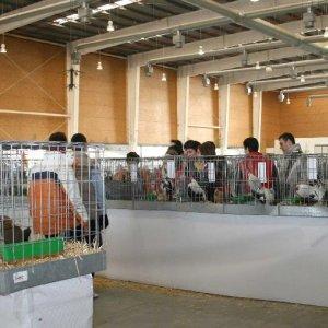 XVIII Concurso-Exposición Nacional de Avicultura Artística