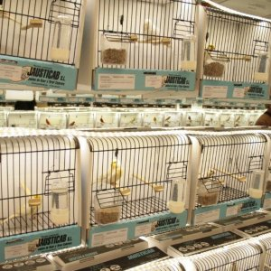 52º Campeonato Ornitológico de España y XII Feria Ornitológica