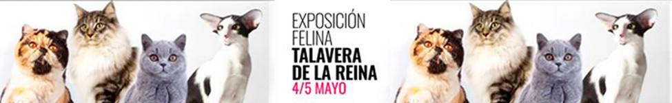 140 y 141 Exposición Internacional Felina