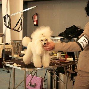 36º Exposición Internacional Canina de Otoño de la RSCE
